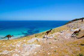 Waves & Wildlife, Stokes Bay